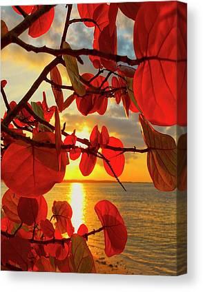 Puerto Canvas Prints
