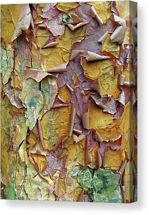 Colorful Bark Canvas Prints