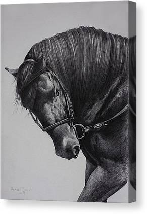 Paso Fino Canvas Prints