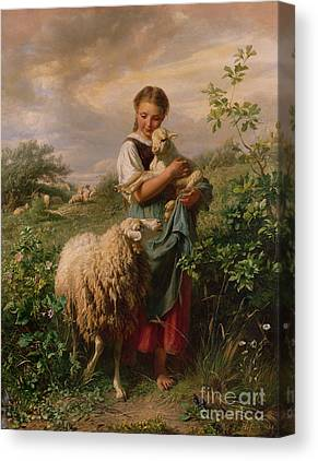 Lamb Canvas Prints