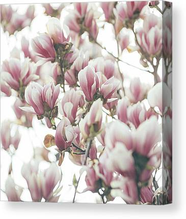 Pinks Canvas Prints
