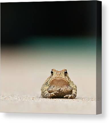 Amphibians Canvas Prints