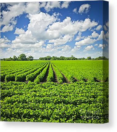 Acreage Canvas Prints