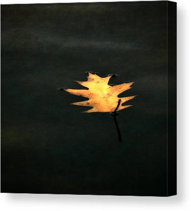 Autumn Leaf On Water Digital Art Canvas Prints