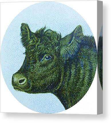 Cow And Calf Canvas Prints