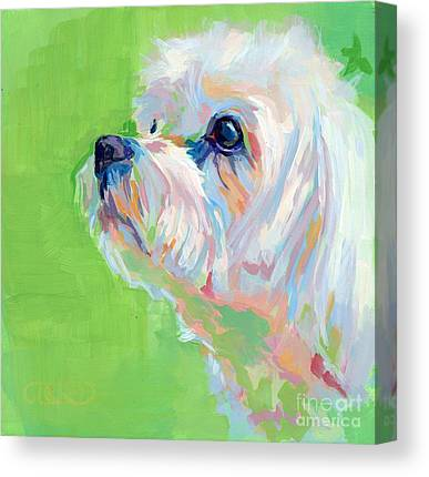 Maltese Canvas Prints