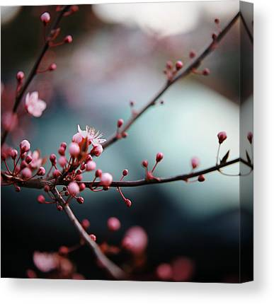 Close Focus Nature Scene Photographs Canvas Prints