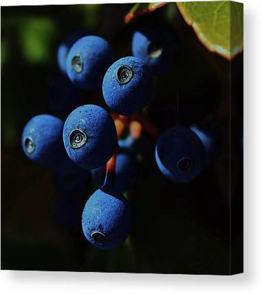 Berry Canvas Prints
