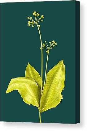Designs Similar to Wild Garlic Plant Botanical Art