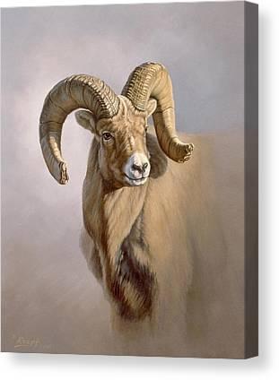 Bighorn Sheep Canvas Prints