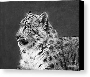 Snow Leopard Limited Time Promotions