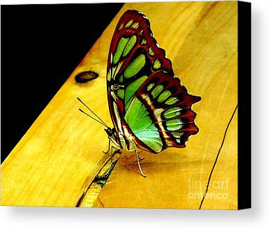 Butterfly Photographs Limited Time Promotions