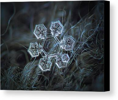 Fragile Photographs Limited Time Promotions