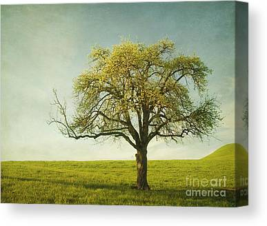 Apfel Canvas Prints