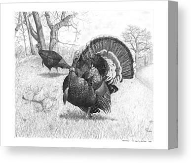 Eastern Wild Turkey Drawings Canvas Prints