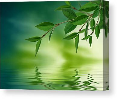 Water Reflections Drawings Canvas Prints