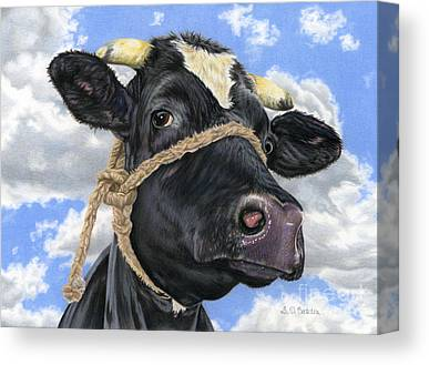 Cow Drawings Canvas Prints