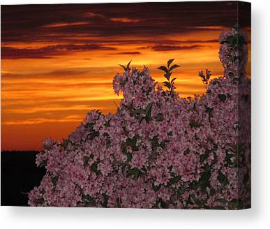 04003 Canvas Prints