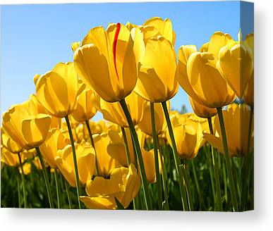 Tulip1 Canvas Prints