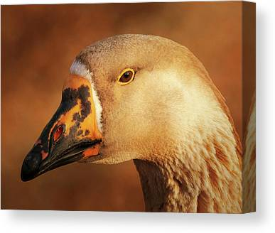 Goose Portrait Canvas Prints
