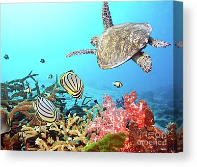 Zoology Canvas Prints