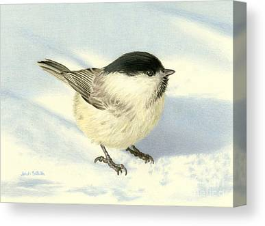 Chickadee Drawings Canvas Prints