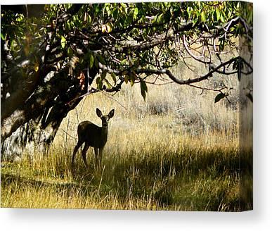 Wild Orchards Photographs Canvas Prints