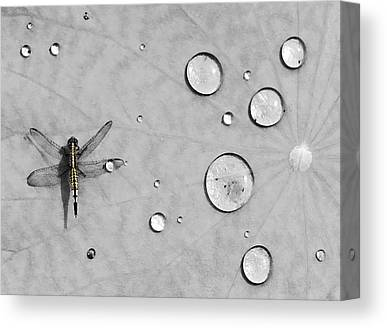 Dragonfly Canvas Prints