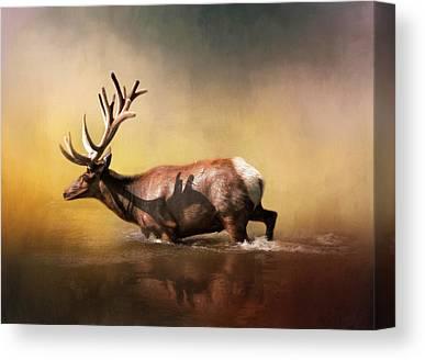 Elk Canvas Prints