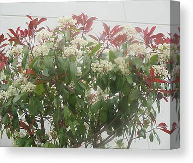 Big Red Canvas Prints