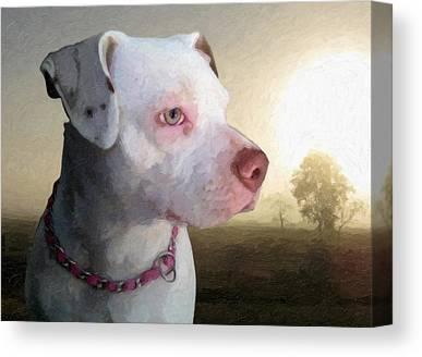 Staffordshire Bull Terrier Canvas Prints