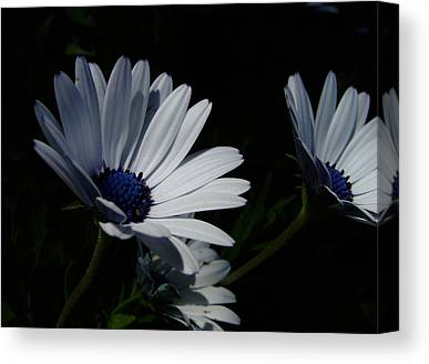 Same Day Flowers Canvas Prints