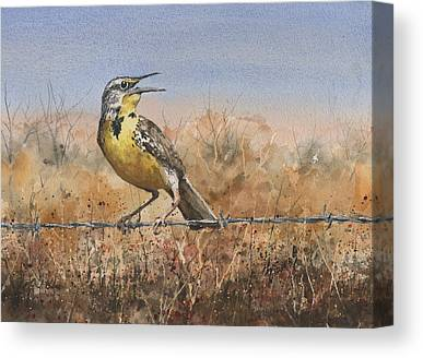 Meadowlark Canvas Prints