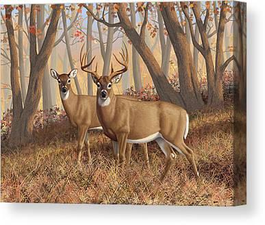Missouri Whitetail Canvas Prints
