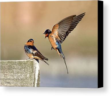 Passeriformes Photographs Limited Time Promotions