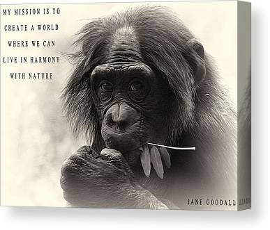 Chimpanzee Mixed Media Canvas Prints