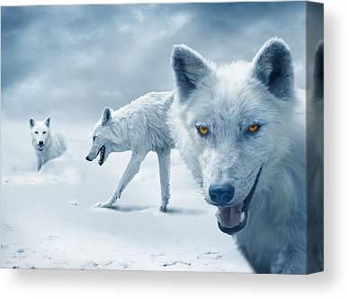 Arctic Wolf Canvas Prints