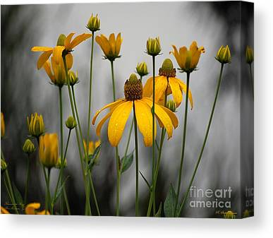 Cone Flower Canvas Prints