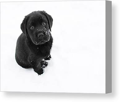 Black Lab Puppy Canvas Prints