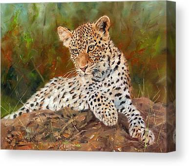 Indian Wildlife Paintings Canvas Prints
