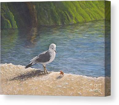 Gull Canvas Prints