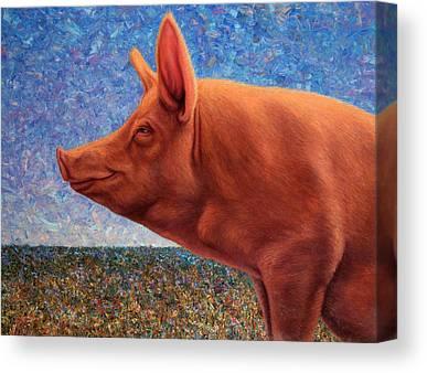 Hogs Canvas Prints
