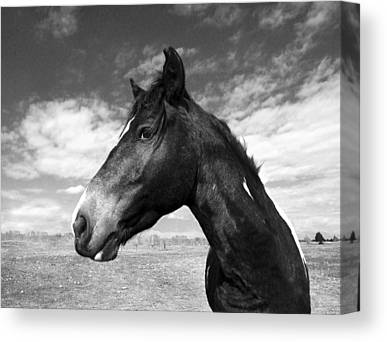 Wild Horse Canvas Prints