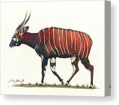 Bongos Canvas Prints