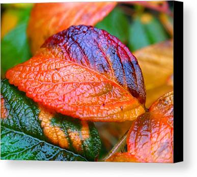 Rainy Day Photographs Limited Time Promotions