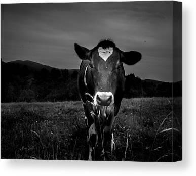 Dairy Farm Canvas Prints