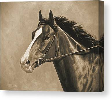 Bay Thoroughbred Canvas Prints