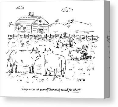 Farm Raised Pigs Canvas Prints