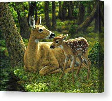 Whitetailed Deer Canvas Prints