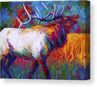 Elk Canvas Prints